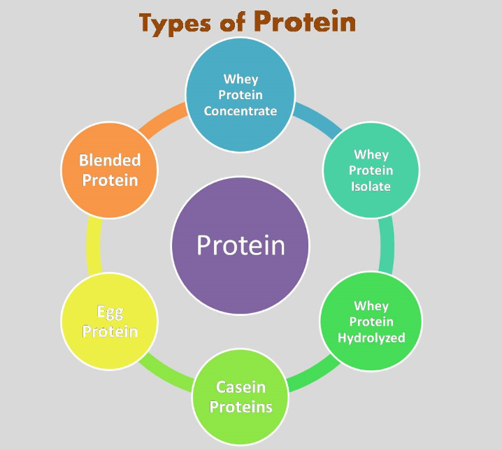 types-of-protein